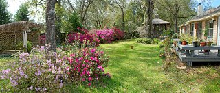 Backyard 3-12-13.jpg