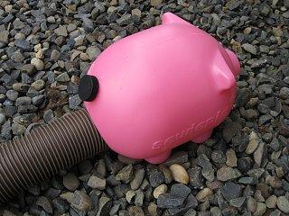 Pink Pig.jpg