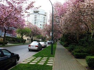 Blossom photo2.JPG