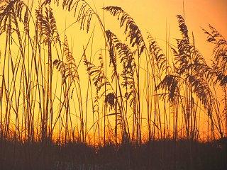 bright oats.jpg