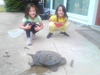 girls with turtle.jpg