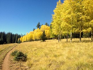 Click image for larger version  Name:Aspens small.jpg Views:22 Size:99.2 KB ID:77159