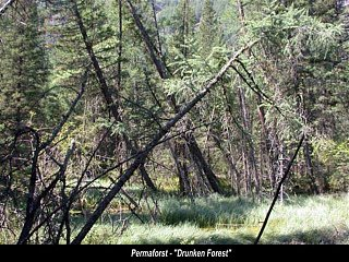 Click image for larger version  Name:PermafrostDrunkenForest__Small_.jpg Views:23 Size:87.3 KB ID:7813