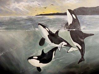 Latest orca painting.jpg