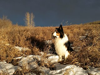Click image for larger version  Name:Jasper at sunset.jpg Views:16 Size:412.2 KB ID:80368