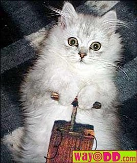 funny_pictures_dynamite_kitty_0n0.jpg