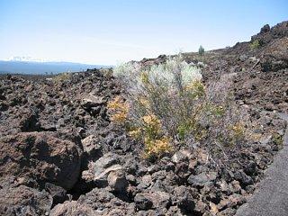 Click image for larger version  Name:Lava_Beds_National_Monument__Bend__Oregon_.jpg Views:39 Size:101.3 KB ID:8709