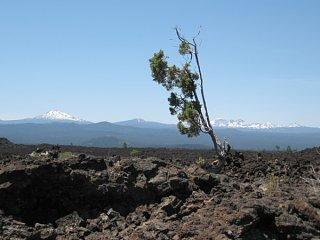 Click image for larger version  Name:Lava_Beds_National_Monument__Bend__Oregon_2.jpg Views:38 Size:54.6 KB ID:8710
