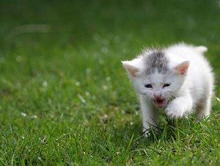 viciouscat.jpg