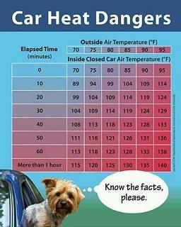 pets in hot weather.jpg