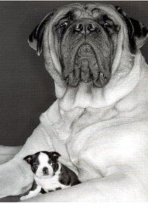 big dog little dog.jpg