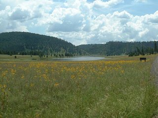 Click image for larger version  Name:600Snow_Lake_3_flowers.jpg Views:32 Size:41.6 KB ID:9535