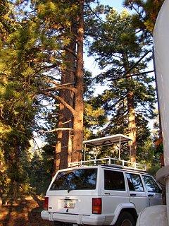 tree_climb_8.jpg